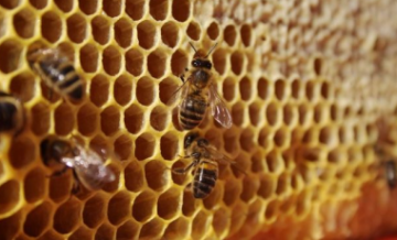 Общества пчеловодства